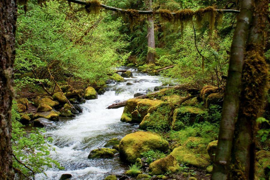 Gorgeous Hikes